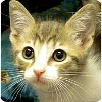 Adopt A Pet :: Angelina - Encinitas, CA