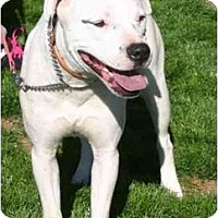 Adopt A Pet :: Neana-Sassy - Gilbert, AZ