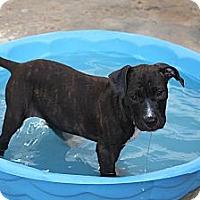 Adopt A Pet :: Twix - Pompano Beach, FL