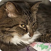 Adopt A Pet :: Casey - Lombard, IL