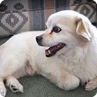 Adopt A Pet :: Morris - Rancho Mirage, CA