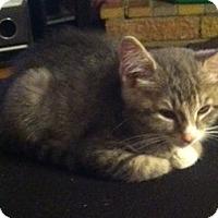 Adopt A Pet :: Olive - Riverside, RI