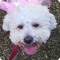 Adopt A Pet :: Maya - La Costa, CA