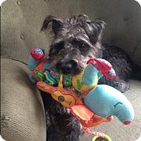 Adopt A Pet :: Landon - Foster, RI