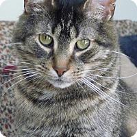Adopt A Pet :: Marley - Sunderland, ON
