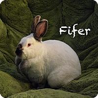 Adopt A Pet :: Fifer - Elizabethtown, KY