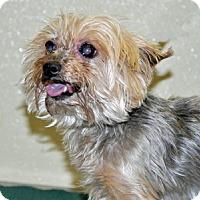 Adopt A Pet :: Madison - Port Washington, NY