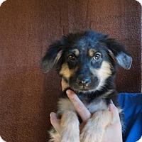 Adopt A Pet :: Grace - Oviedo, FL