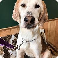 Adopt A Pet :: Skelator (P4P) - Maryville, MO