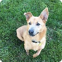 Adopt A Pet :: Molly Dolly - Alexandria, VA