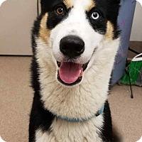 Adopt A Pet :: Hunter - Chambersburg, PA