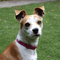 Adopt A Pet :: Lily in Conroe/Houston - Austin, TX
