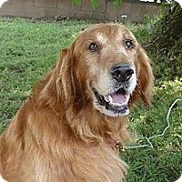 Adopt A Pet :: Jake - Mission Hills, CA