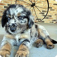 Adopt A Pet :: Bertram - Available SOON - Savannah, GA