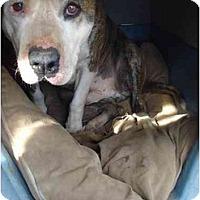 Adopt A Pet :: Rex - Fowler, CA