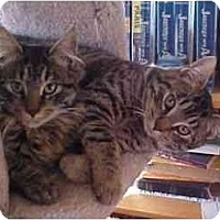 Adopt A Pet :: Luke & Lee (Best Buddies!) - Portland, OR