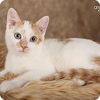 Adopt A Pet :: Dexter - Plymouth, MN