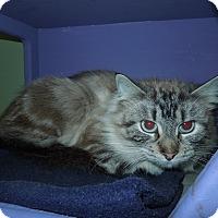 Adopt A Pet :: Sara - Medina, OH