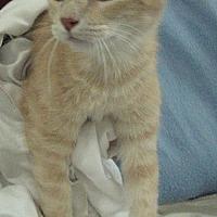 Adopt A Pet :: Fabio - Fort Walton Beach, FL