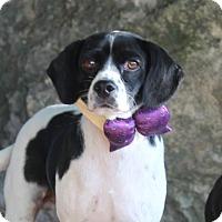 Adopt A Pet :: Rebel - Dalton, GA