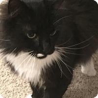 Adopt A Pet :: Josie - Encinitas, CA