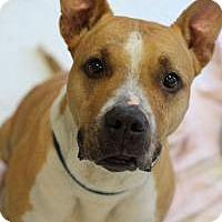Adopt A Pet :: Lulu - Yukon, OK