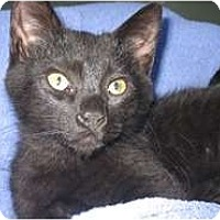 Adopt A Pet :: Jacque - Shelton, WA