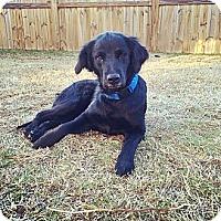 Adopt A Pet :: Drita - Fort Valley, GA