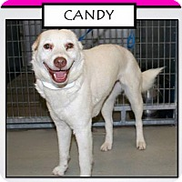 Adopt A Pet :: Candy - Lewisville, IN