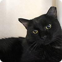 Adopt A Pet :: Doctor Dumpling - Chicago, IL