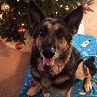 Adopt A Pet :: Amazing Grace - Morrisville, NC