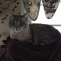 Adopt A Pet :: Blueberry - Algonquin, IL