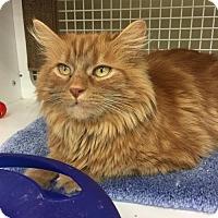 Adopt A Pet :: Annie - Cincinnati, OH