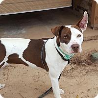 Adopt A Pet :: Patches - Trenton, NJ