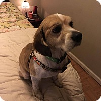 Adopt A Pet :: Champ - Bronx, NY