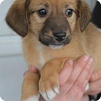 Adopt A Pet :: Connor - Danbury, CT