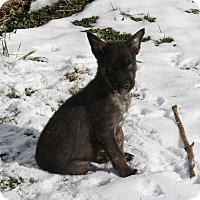 Adopt A Pet :: Winonna - Morgantown, WV