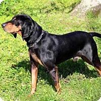 Adopt A Pet :: D'ARGO - Salem, NH