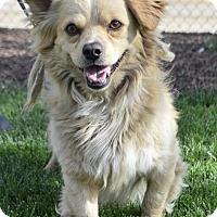 Adopt A Pet :: Brainy - Palo Alto, CA