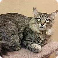 Adopt A Pet :: Rangeley - Capshaw, AL