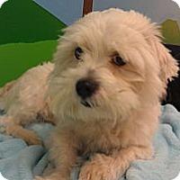 Adopt A Pet :: Skippy - New Windsor, NY