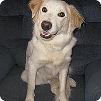 Adopt A Pet :: Cory - Golden Valley, AZ