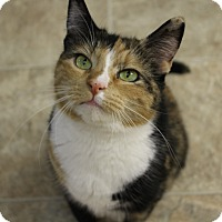 Adopt A Pet :: HOLLY - levittown, NY