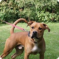 Terrier (Unknown Type, Medium) Mix Dog for adoption in Baden, Pennsylvania - Zeus
