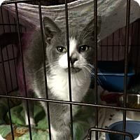 Adopt A Pet :: Martin - Byron Center, MI