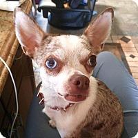 Adopt A Pet :: Lily - Edmonton, AB