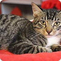Adopt A Pet :: Matador - Sarasota, FL