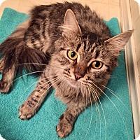 Adopt A Pet :: Ella - Colmar, PA