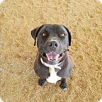 Adopt A Pet :: Nikki - Chino Valley, AZ