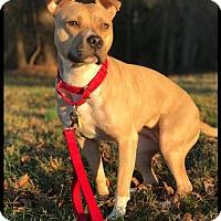 Adopt A Pet :: Midge - Richmond, VA